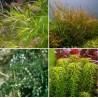 Kit Plantas - Oxigenadoras I