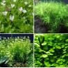 Kit Plantas - Verdes Médias