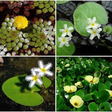 Kit Plantas - Flutuantes Fixas