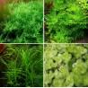 Kit Plantas - Verdes Altas