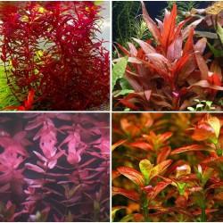 Kit Plantas - Vermelhas