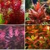 Kit Plantas - Vermelhas I